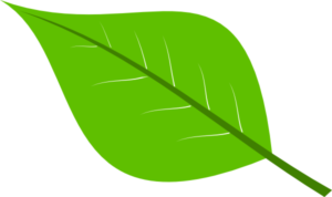 large-green-leaves-clipart-1